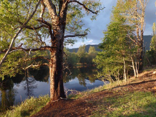 Bosque reflejado sobre un río