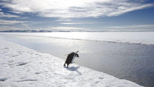 طائر بطريق في القارة القطبية الجنوبية
