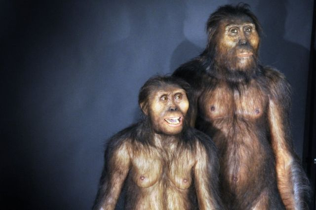 Early human ancestor Lucy 'died falling out of a tree'