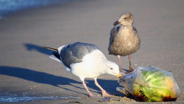 Ave comiendo una bolsa de plástico