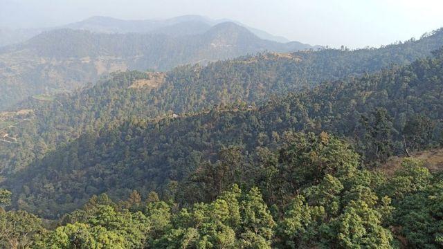 गुराँसेको वन