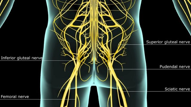 Diagram showing nerves of lower body