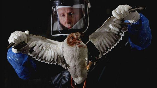 грип птахів