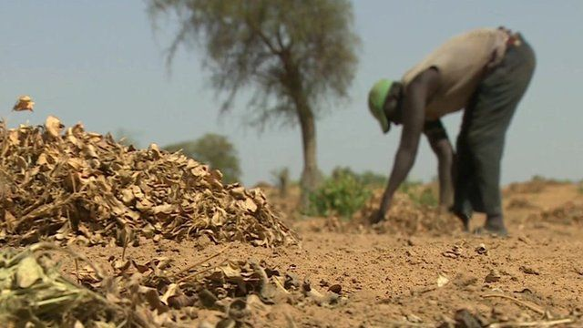 Man tending land in Senegal