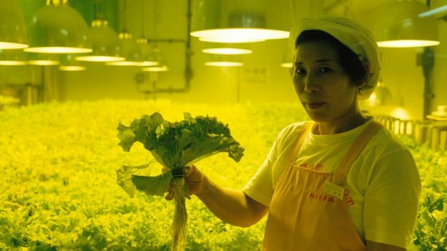 Worker shows vegetable growing without soil in Japan