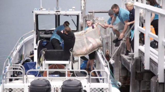 マンリー海洋生物保護センターのスタッフが「フラッフィー」を海に返した(12日、マンリー)
