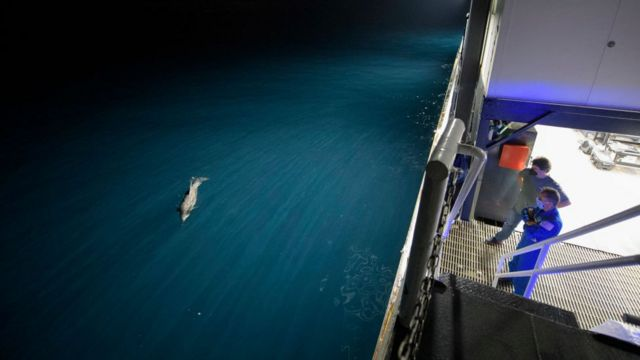 Менеджер транспортної інтеграції МКС в NASA Білл Спетч і астронавт NASA Джозеф Акаба спостерігають за дельфіном в очікуванні приводнення капсули Dragon Resilience