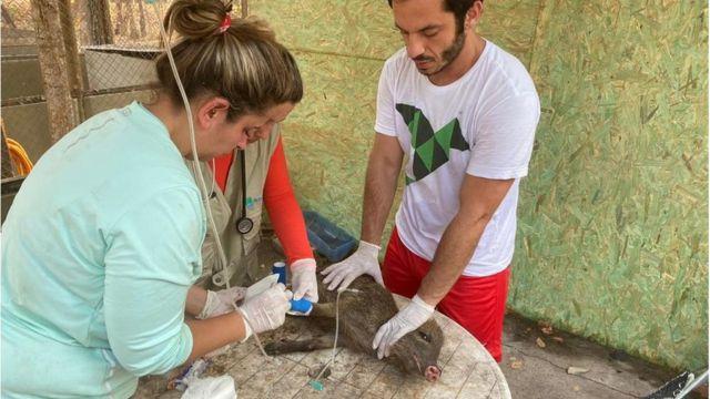 Roched Seba e Mariana Machado cuidam de Benta, bebê queixada