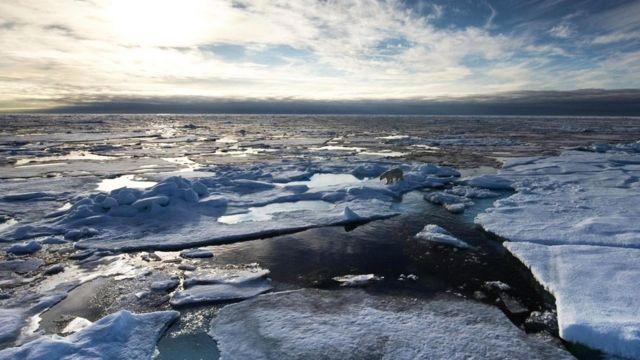 Резкие изменения климата - угроза существованию полярных медведей