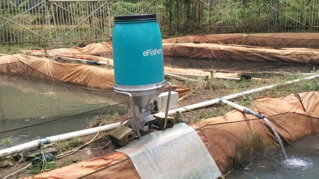 Efishery Pemberi Pakan Ikan Otomatis Buatan Indonesia Diperkenalkan Ke Asia Bbc News Indonesia