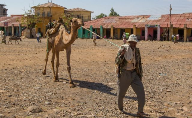A man leads a camel in the Muslim area of Aksum, Ethiopia