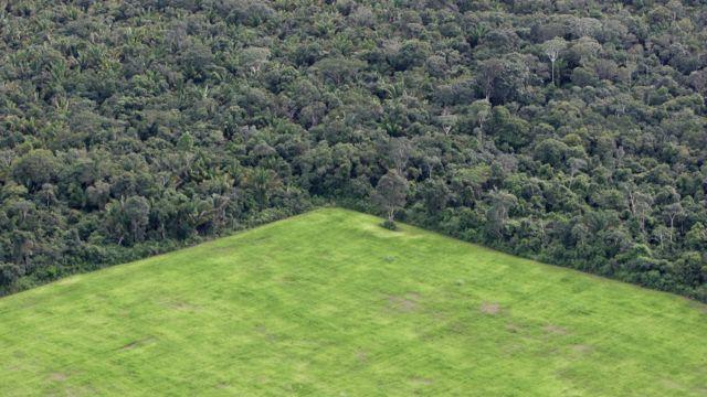 Desforestación para plantaciones de soya en Brasil