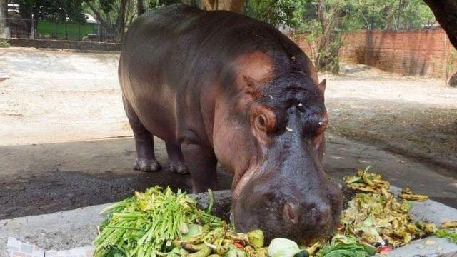 Gustavito comiendo sus vegetales.