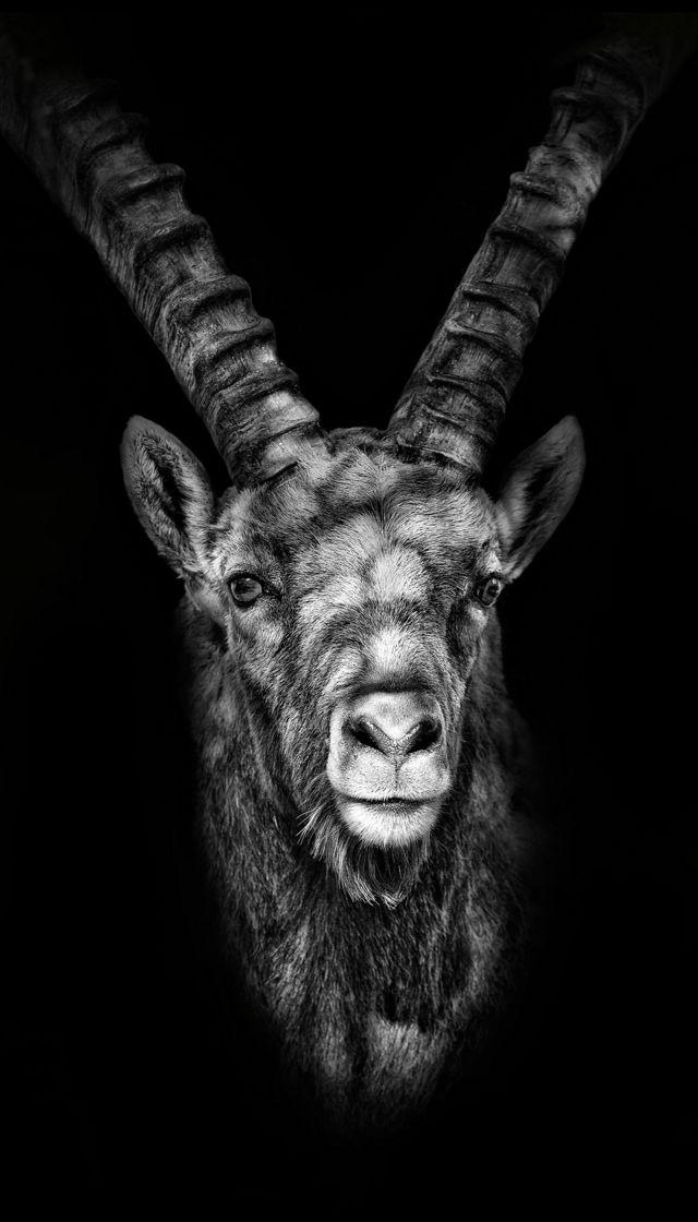 Nova exposição mostra animais em caverna camuflada nos Alpes Suíços
