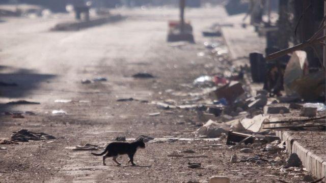 قطة تمشي وسط الأنقاض في حلب.