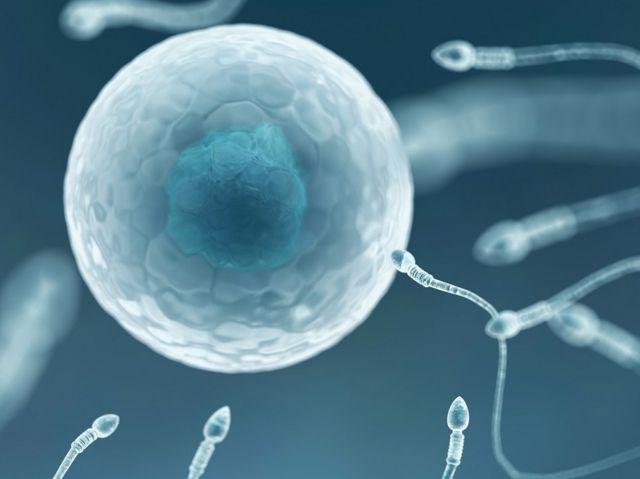 การกลายพันธุ์ซึ่งทำให้เกิดวิวัฒนาการ อาจเกิดขึ้นได้เองอย่างอิสระระหว่างการแบ่งตัวของเซลล์สืบพันธุ์