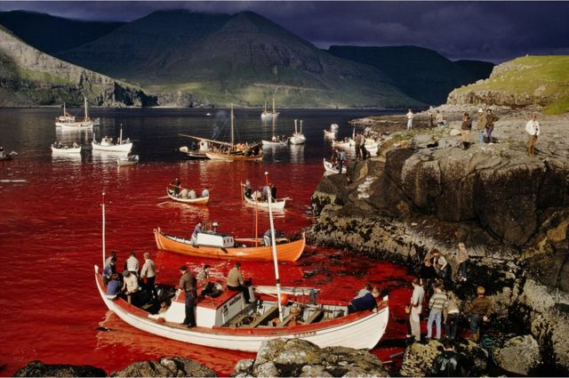 Men in boats float on a blood stained sea during the annual whale hunt in the Faroe Islands