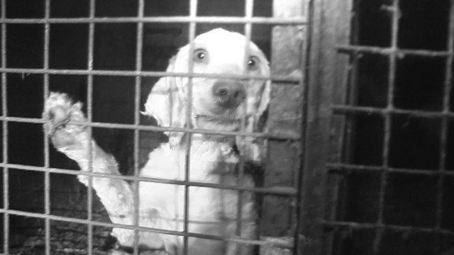 A dog inside a puppy farm