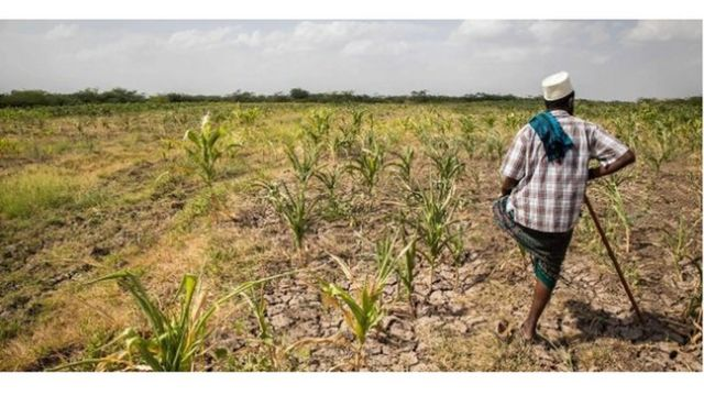 Sécheresse frappe toute la Corne de l'Afrique