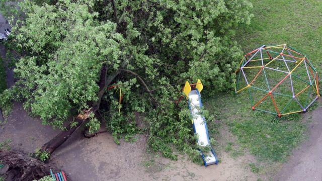 Упавшее на десткую площадку дерево
