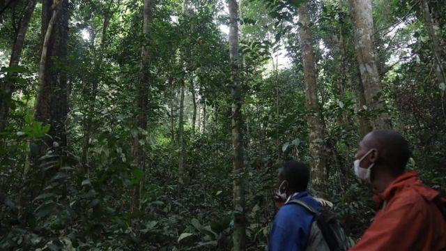 Bien qu'il soit prouvé que les concessions conduisent à une gestion durable de la forêt, le processus d'acquisition d'une concession par une communauté est complexe et coûteux