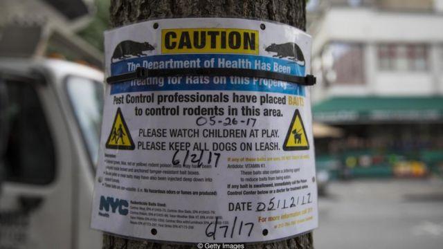 Aviso do departamento de saúde em poste com sacos de lixo rasgados por ratos no Brooklyn, Nova York
