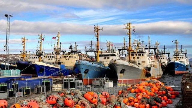 كيف تساعد الهواتف الذكية الصيادين في تحديد مواقع الأسماك؟ - BBC News عربي