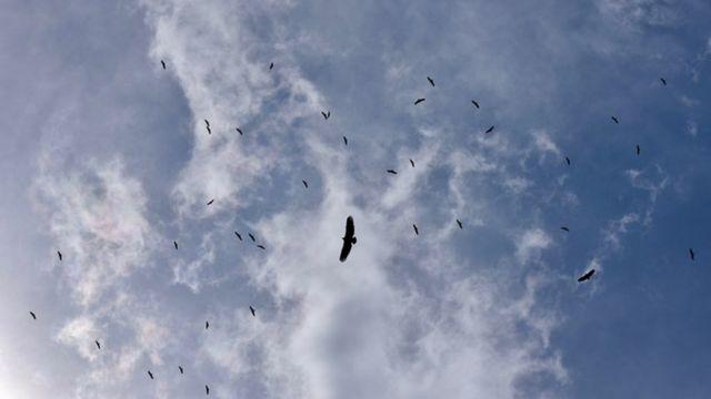 喂食之前几百只秃鹫在天空中盘旋一个小时。