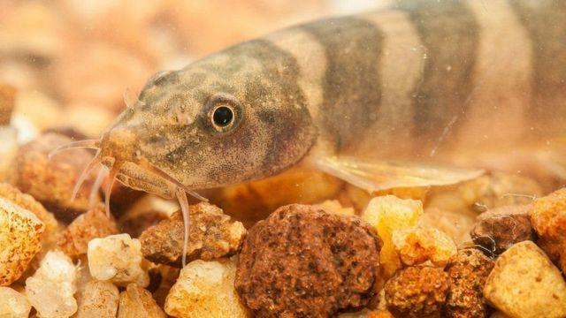 மேகாங் ஆற்றுப்பகுதியில் புதிய இனங்கள் கண்டுபிடிப்பு