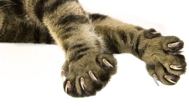 Garras de gato.
