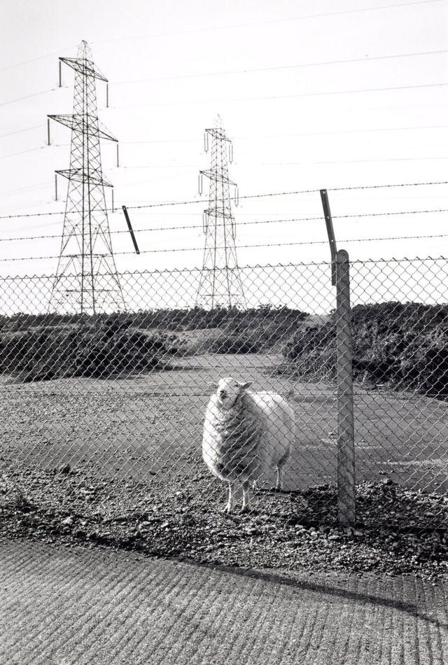 Загороджена міністерством оборони громадська земля, Лідд, 1988 р.