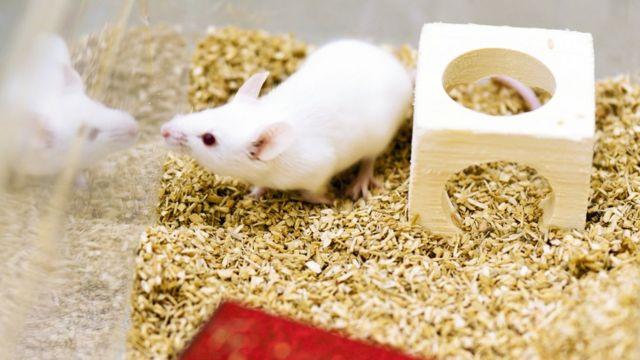 マウスを使ってレム睡眠が記憶にどのような役割を果たしているのか実験した