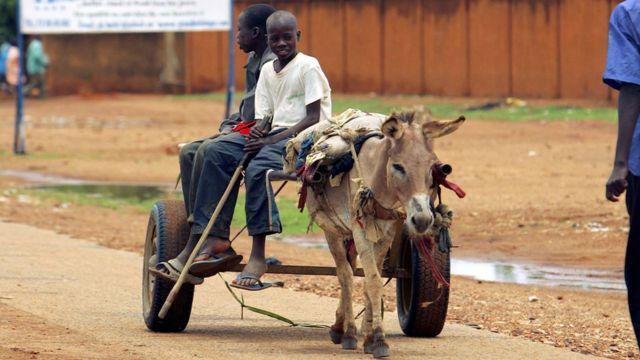 Nigerdə eşşək