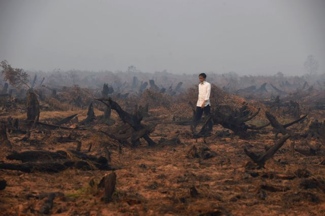 President Joko Widodo's vowed to stop the annual fires and protect peatland.