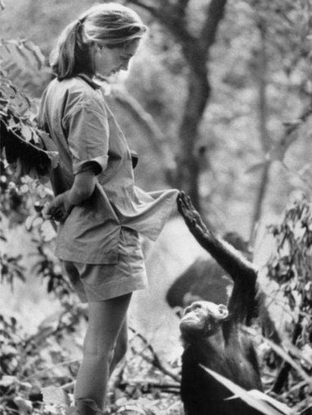Джейн общается с шимпанзе