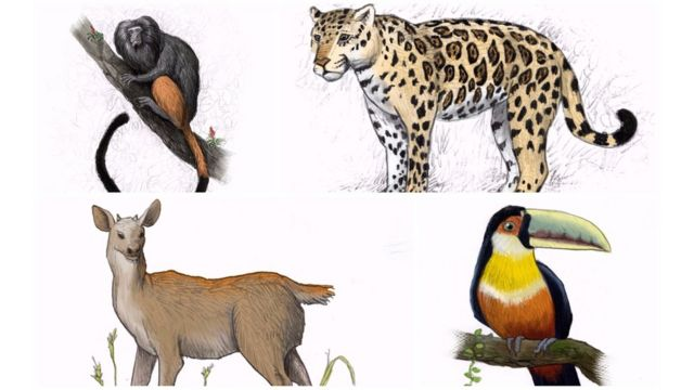 Animais da antiga fauna paulistana