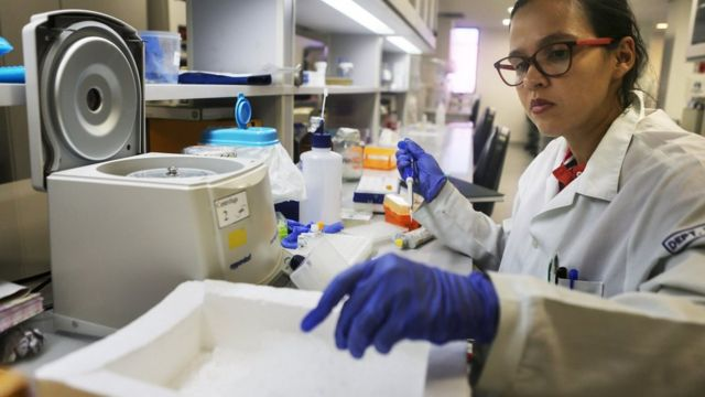 Pesquisadora analisa DNA de mosquitos no Instituto Fiocruz em Recife