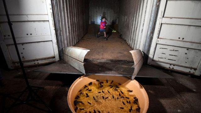 Armadilha para ratos dentro de contêiner na Austrália