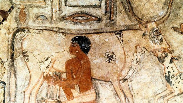 挤奶的古埃及人