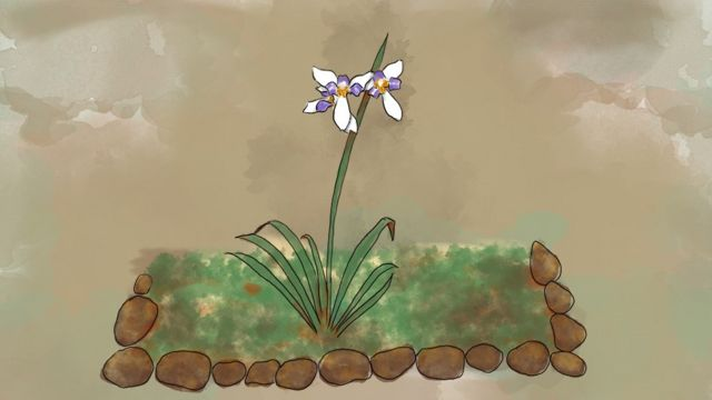 Ilustración de flor de jardín.