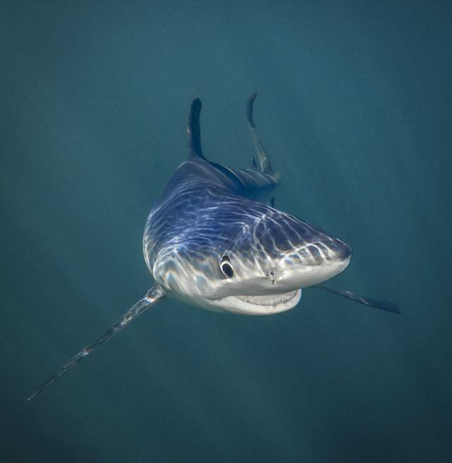 치즈~! 타냐 후퍼맨은 미소를 짓는 상어 사진으로 '바다 동물' 부문을 수상했다