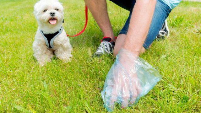 Когда подбираете экскременты за своей собакой, подумайте о том, какие большие деньги вертятся в какашечьем бизнесе