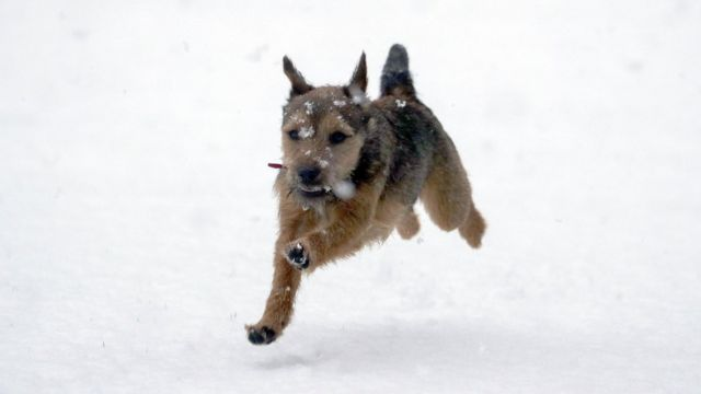 Winston, an eight-month-old border terrier, enjoys the snow for the first time near Windsor, Berkshire