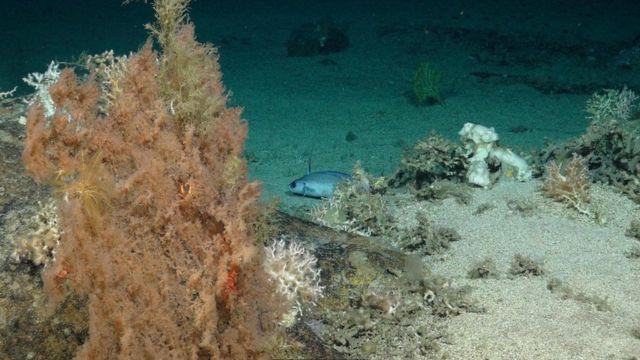 حماية الشعاب المرجانية في المملكة المتحدة