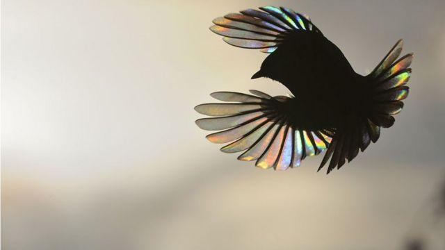 चिड़िया के पर से छन कर निकलने वाली सतरंगी किरणें