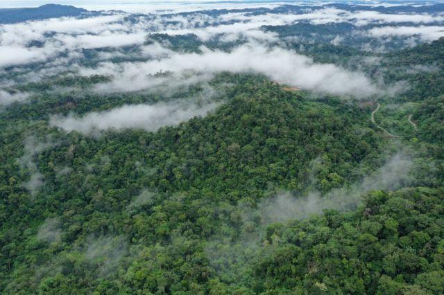 جنگل های حاره ای امروز برخلاف آنچه در زمان دایناسورها وجود داشت بسیار انبوه هستند
