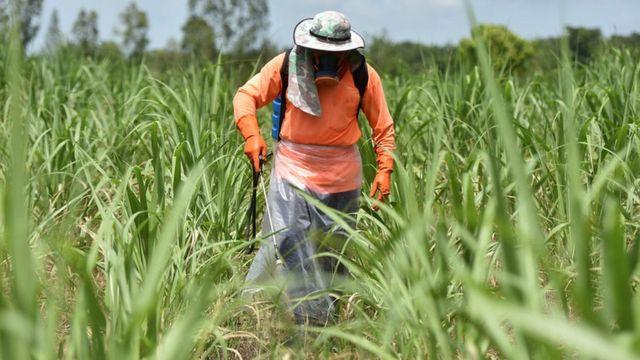 เกษตรกรพ่นสารเคมีในไร่