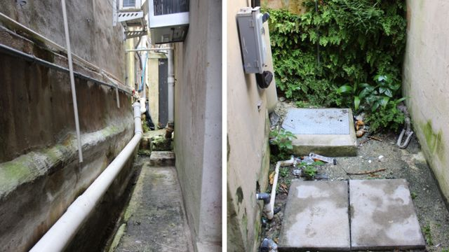 The alleyway where the snails were rediscovered