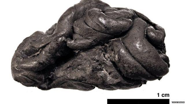5700 वर्षांपूर्वीच झाड