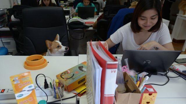สุนัขนั่งประจำที่ เพื่อรออาหารจากเจ้านาย